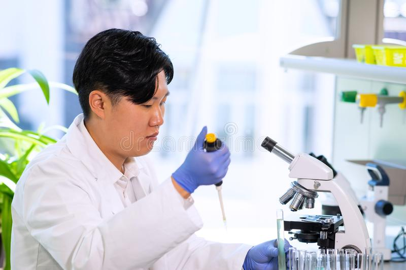 Asian medical doctor working in research lab. Science assistant making pharmaceutical experiments. Chemistry, medicine. Asian medical doctor working in research royalty free stock photography