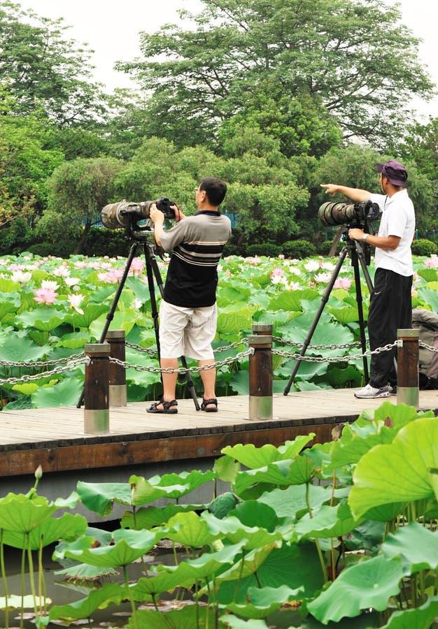 Asian men photographing. Asian men taking photo at lotus pond, honghu park,shenzhen city,china may 24,2012 royalty free stock image