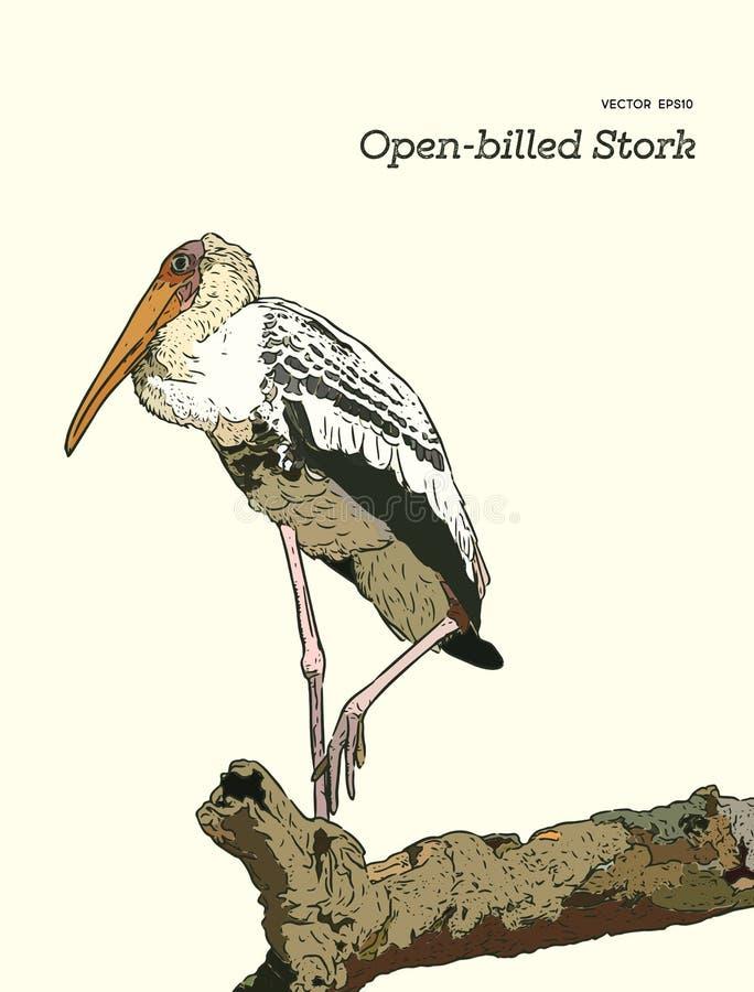 Asian openbill birds on tree branch. stock illustration