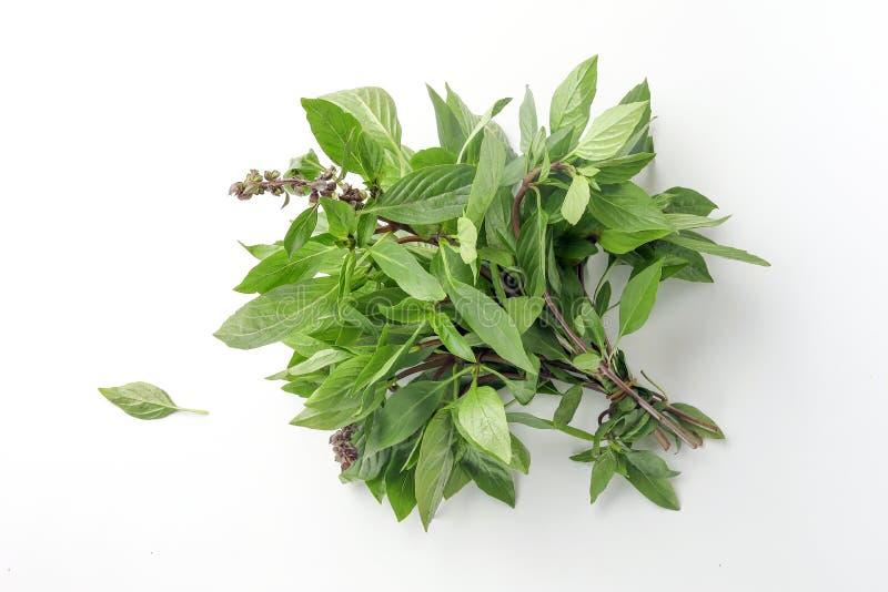 Asian Thai basil. Fragrant green herb on white background royalty free stock image