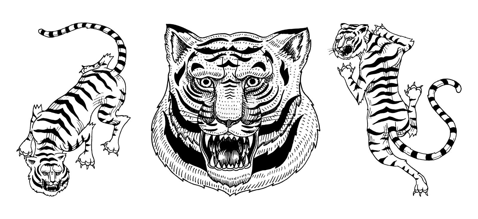Asian tigers in vintage japanese style for logo. Face Close up. Wild animals cats. Predators from the jungle. Hand drawn. Engraved Monochrome Old Sketch for royalty free illustration