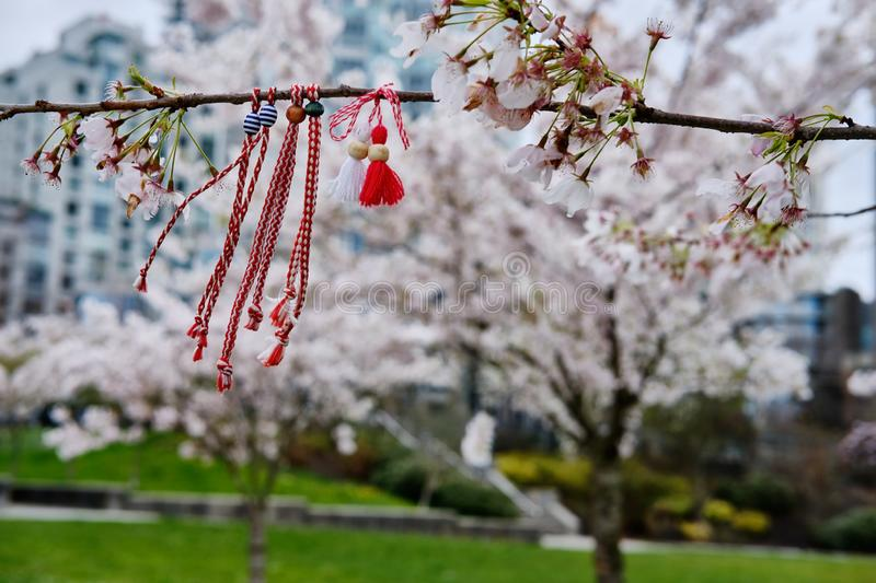 Asian traditional red rope on cherry blossom tree branch, Vancouver public park royalty free stock photography