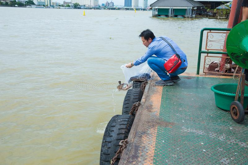 Asian traveler is release the Snakehead fishs to the river at port. royalty free stock images