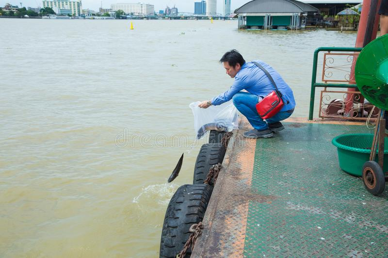 Asian traveler is release the Snakehead fishs to the river at port. stock image