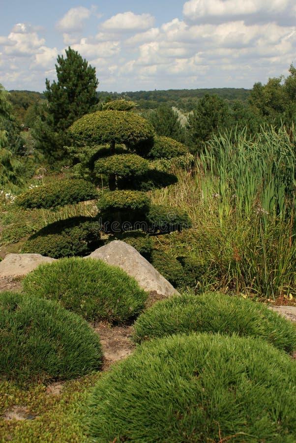 Download Asian tree stock photo. Image of japan, garden, asian - 11797660