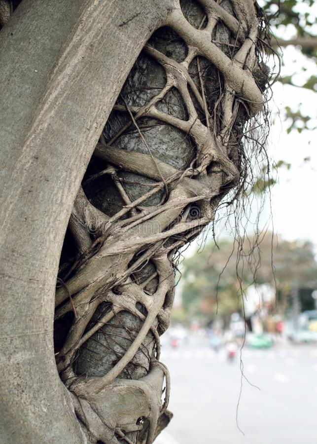 Asian tree with strange branches royalty free stock photos
