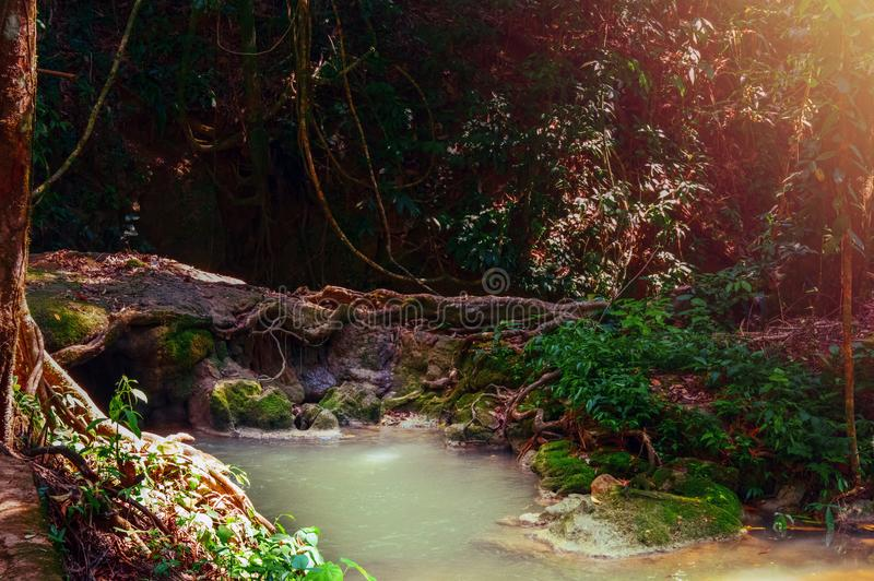 Asian tropical rainforest with jungle river. Dark magic forest with sunshine. Nature concept. royalty free stock photos