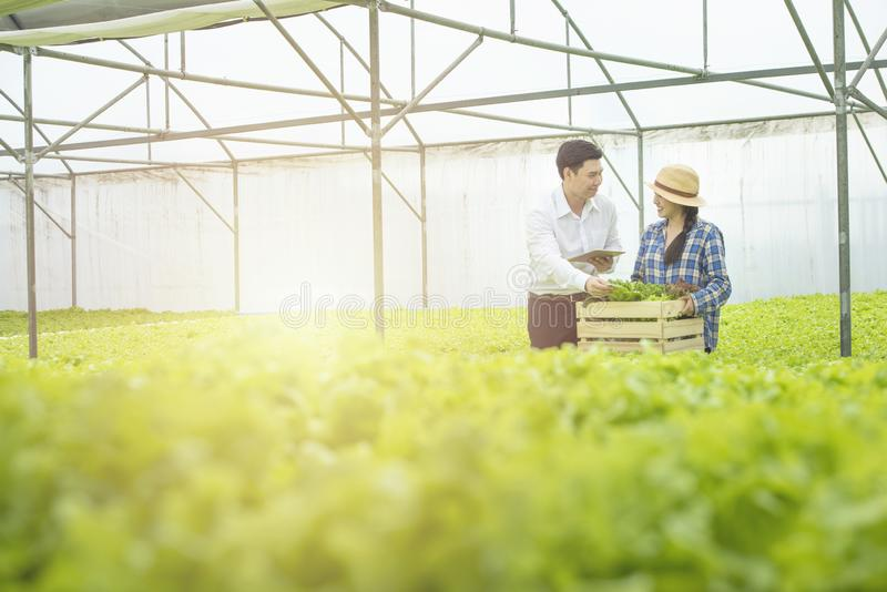 Asian woman farmer hold wooden basket show to asian man scientist come check quality of green vegetable in greenhouse hydroponic royalty free stock photos