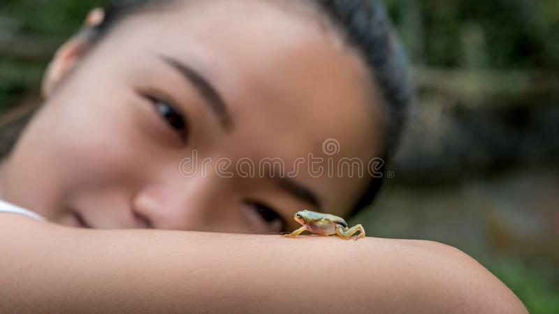 Asian woman looking and holding a small forest frog toad. Baby wild reptile stock photos