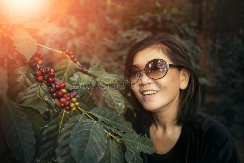 Asian woman smiling face happiness emotion near raw coffee seed on tree branch stock images