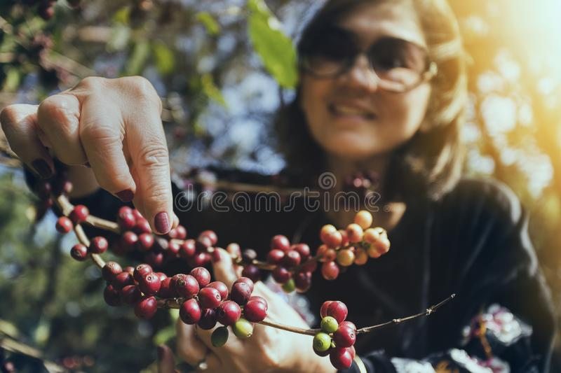 Asian woman smiling face happiness emotion near raw coffee seed on tree branch stock image