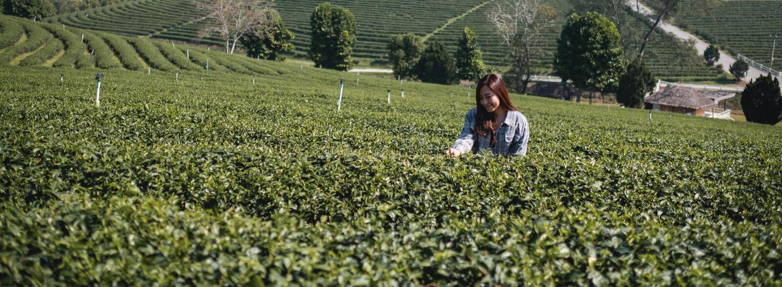 A woman standing in tea plantation in Chiang Rai, Thailand royalty free stock photography