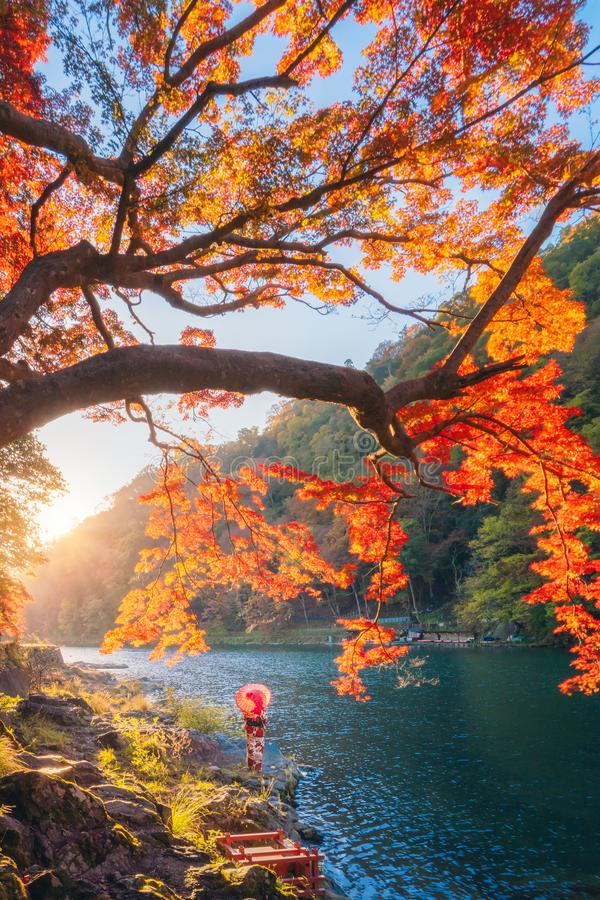 An Asian woman wearing Japanese traditional kimono with red umbrella standing with red maple leaves or fall foliage at Arashiyama. River in Autumn season during stock image