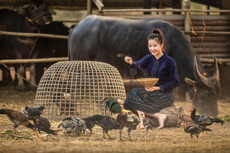 Asian woman who have a rural lifestyle are feeding their chicken royalty free stock photography