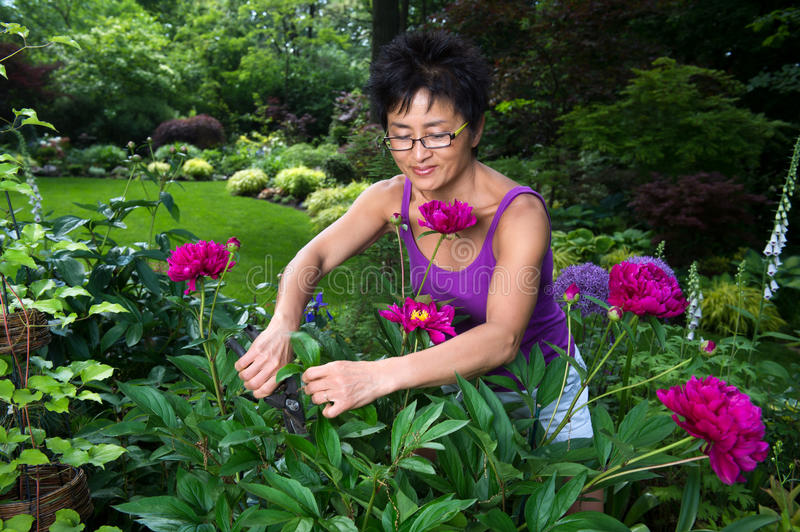 Asian Woman Working in Garden stock photo
