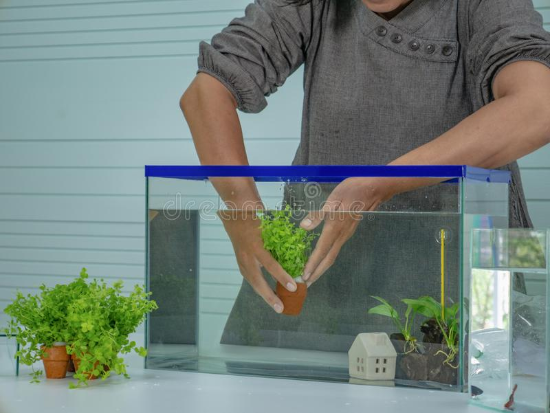 Asian women set the fish tank stock photos
