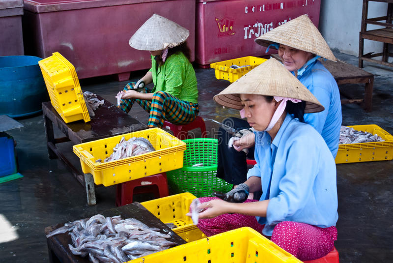 Asian women working in a fishery royalty free stock photography