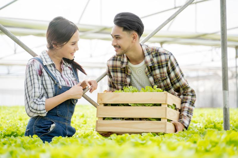 Asian young couple farmer in greenhouse hydroponic holding basket of vegetable. They are harvesting vegetables green salad. Asian young couple farmer in stock photo