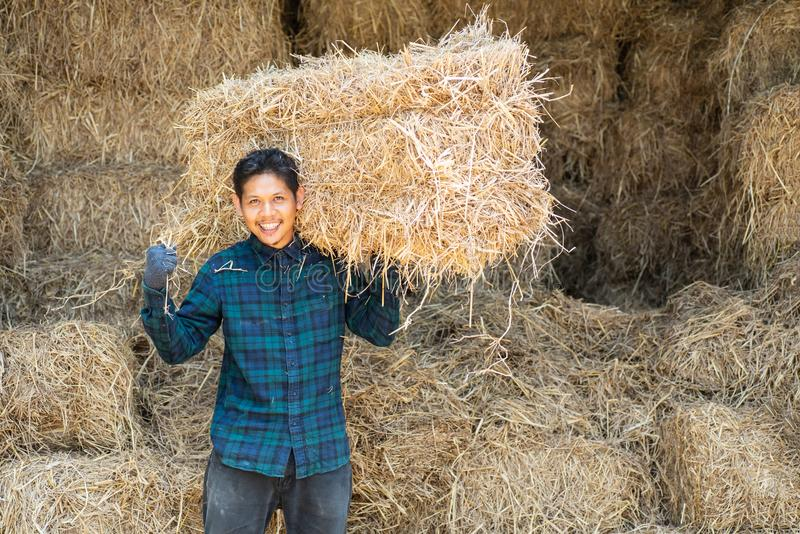 Asian Young Farmer Carry Organic Rice Straw For Livestock Stock Photo