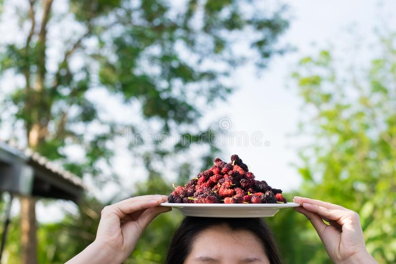 Asian young woman holding fresh mulberry fruits with very useful for the treatment and protect of various diseases, organic fresh. Ripe fruit royalty free stock photo