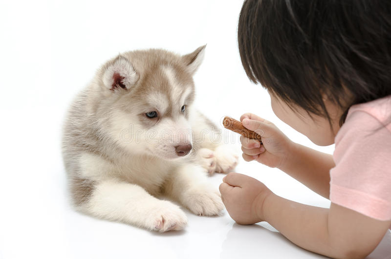Asianboy feeding puppy stock images