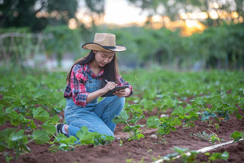 Asian women Agronomist and farmer Using Technology for inspecting in Agricultural and organic vegetable Field. Asian woman Agronomist and farmer Using Technology stock images