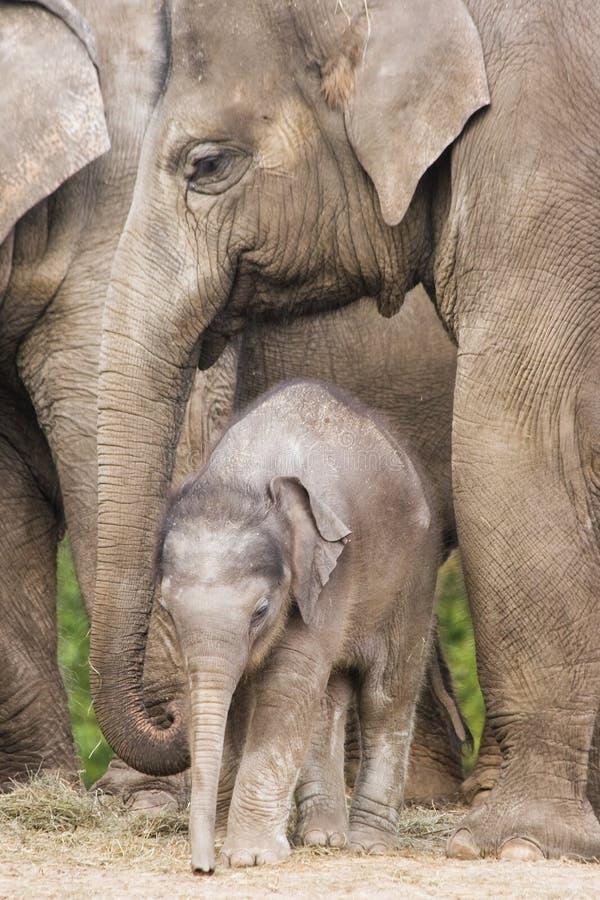 asiatet behandla som ett barn elefanten royaltyfria bilder