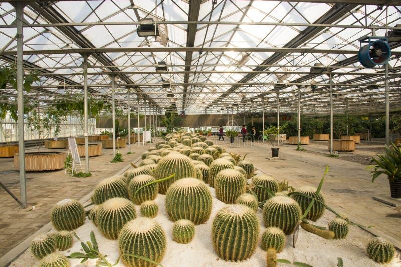 Asiatico Cina, Pechino, giardino geotermico dell'Expo, serra immagini stock libere da diritti
