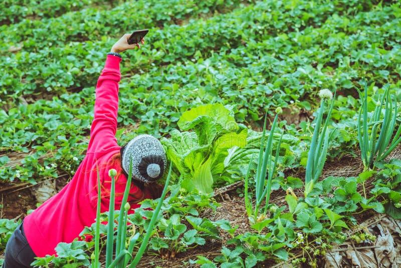 Asiatico della donna del giardiniere gli agricoltori stanno prendendo le foto Selfie nei diagrammi di verdure immagini stock