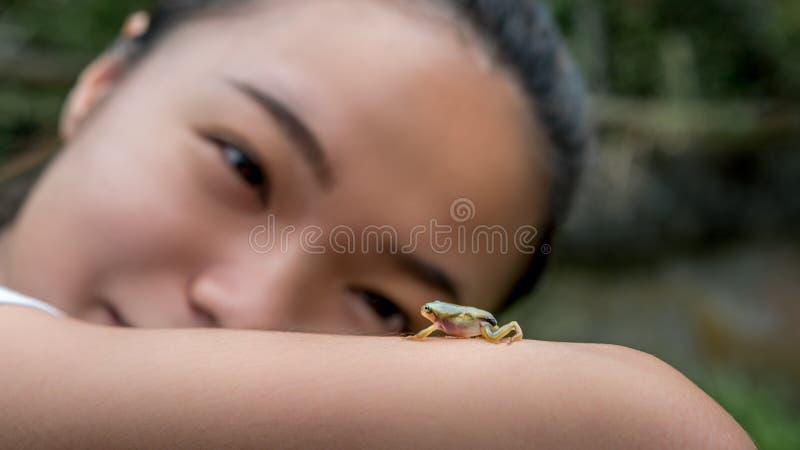 Asiatin, die eine kleine Waldfroschkröte schaut und hält Wildes Reptil des Babys stockfotos