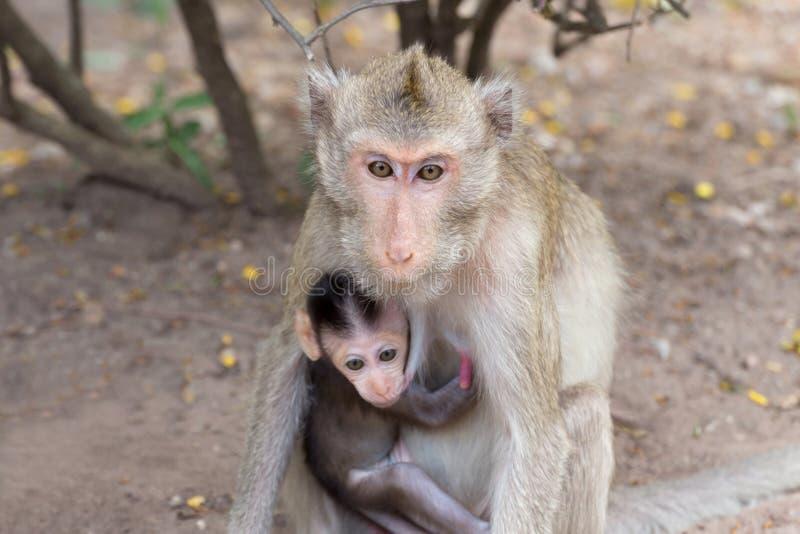Asiatische Affemutter, die Baby auf der Brust umarmt lizenzfreie stockbilder