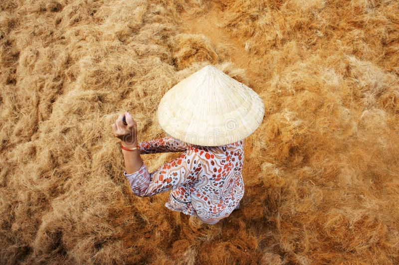 Asiatische Arbeitskraft, Kokosnuss, Vietnamese, Coir, der Mekong-Delta stockbild