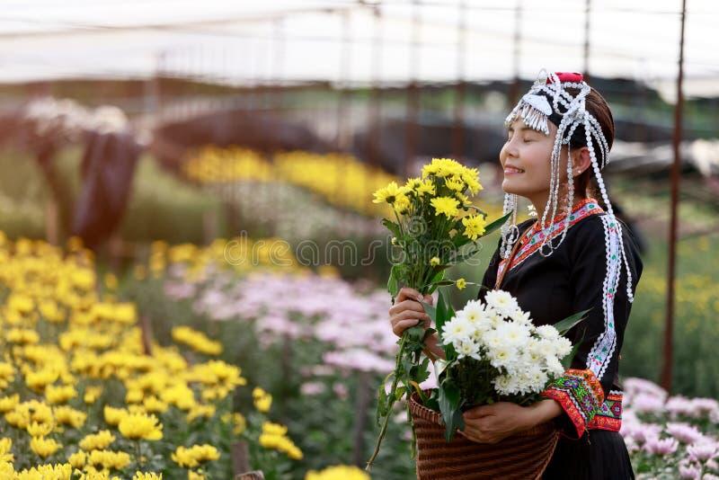 Asiatische lokale Frau oder Hmong sammeln gelbe und weiße Chrysantheme lizenzfreies stockfoto