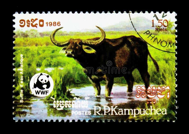 Asiatische Wasser-Büffel Bubalus arnee bubalis, serie Kapital der Weltwild lebenden tiere, circa 1986 lizenzfreie stockfotografie