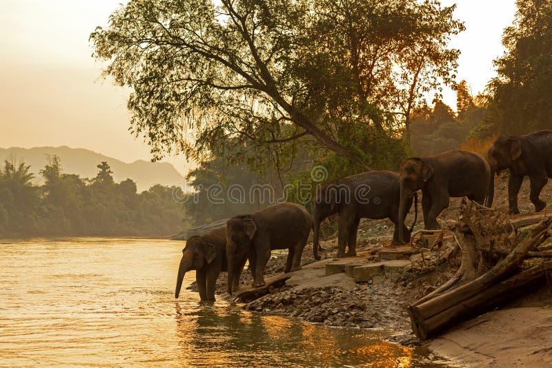 Asiatische wilde Familiengruppe Elefanten, die in den natürlichen Fluss am tiefen Wald gehen lizenzfreies stockfoto