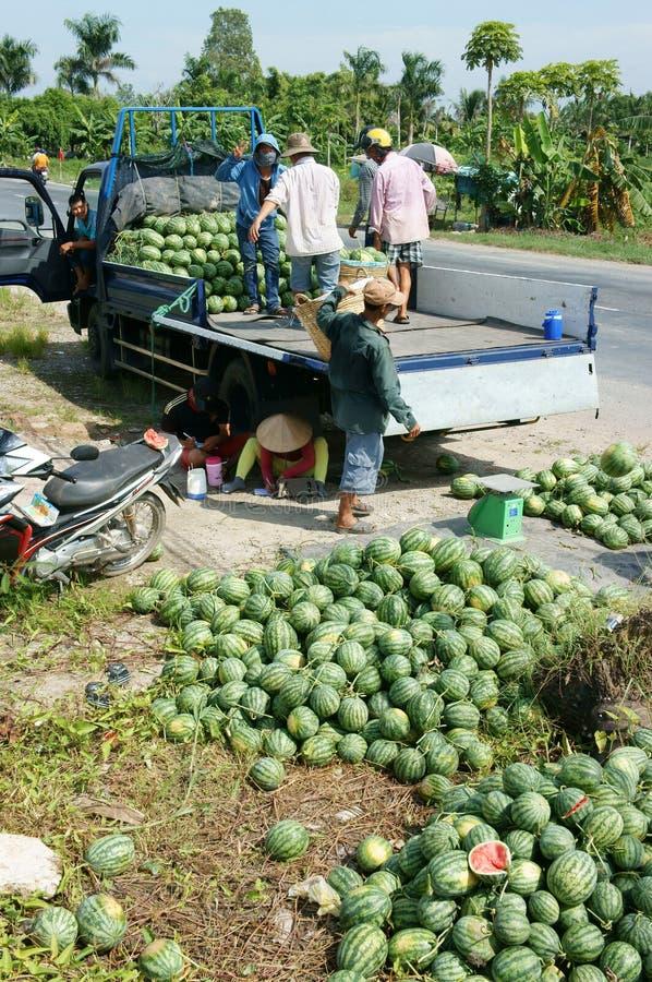 Asiatischer Landwirt, Landwirtschaftsfeld, Vietnamese, Wassermelone stockfotos
