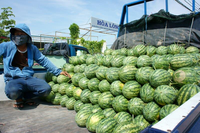 Asiatischer Landwirt, Landwirtschaftsfeld, Vietnamese, Wassermelone lizenzfreie stockbilder