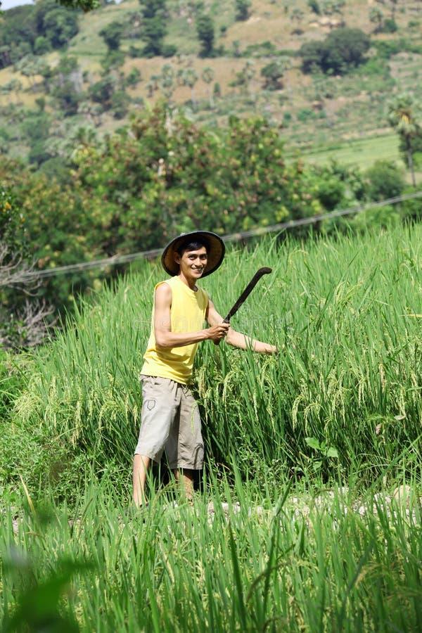 Asiatischer Landwirt am Reisfeld stockfotografie