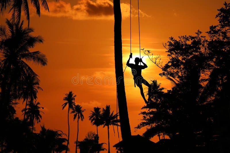 Asiatischer Mann, der die Kokosnussbäume klettert, um morgens zu ernten stockbild