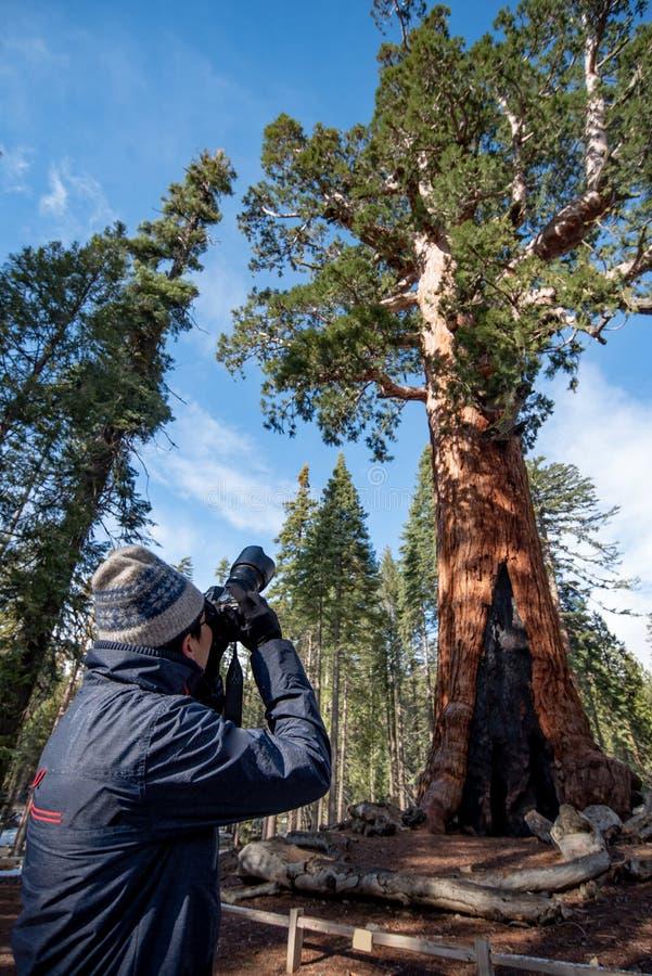 Asiatischer Manntourist, der Foto des Graubär-Riesen macht lizenzfreies stockfoto
