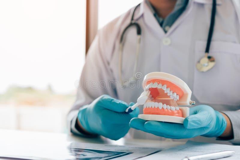 Asiatischer Mannzahnarzt hält den Gebisskiefer, der wie man die Zähne zeigt, putzt stockfotos