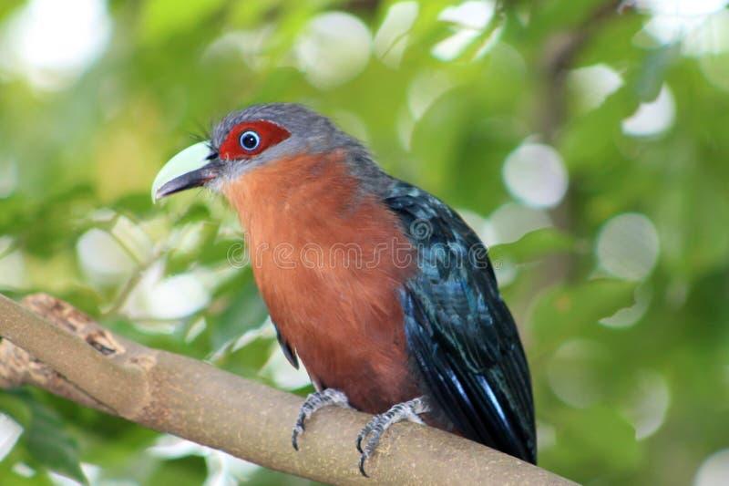 Asiatischer Vogel am Zoo stockbilder