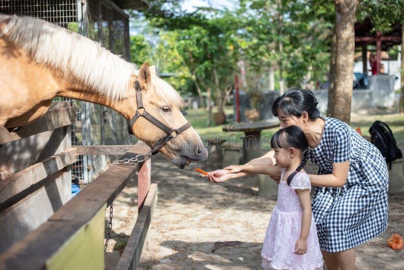Asiatisches kleines chinesisches Mädchen und Mutter, die ein Pferd mit Karotte einzieht stockfotografie