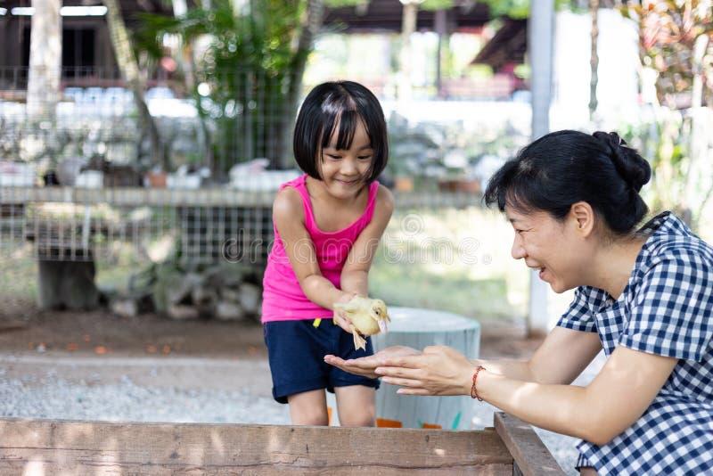 Asiatisches kleines chinesisches Mädchen und Mutter, die wirh Ente spielt lizenzfreie stockfotografie