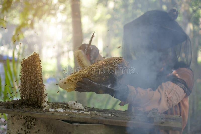 Asiatisk beekeeper som rymmer fulla bin för en honungskaka med skyddande arbetskläder som borstar biet, och lugna bin vid rök, Th royaltyfri foto