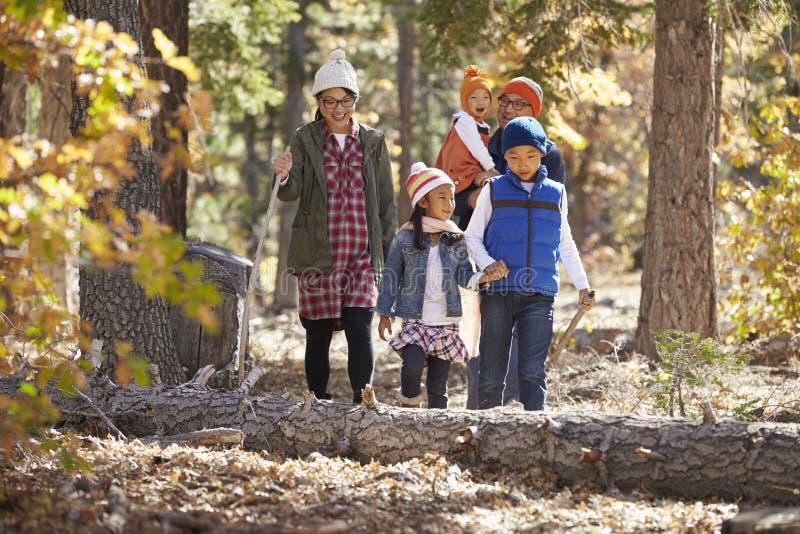 Asiatisk familj av fem som tillsammans tycker om en vandring i en skog royaltyfri foto