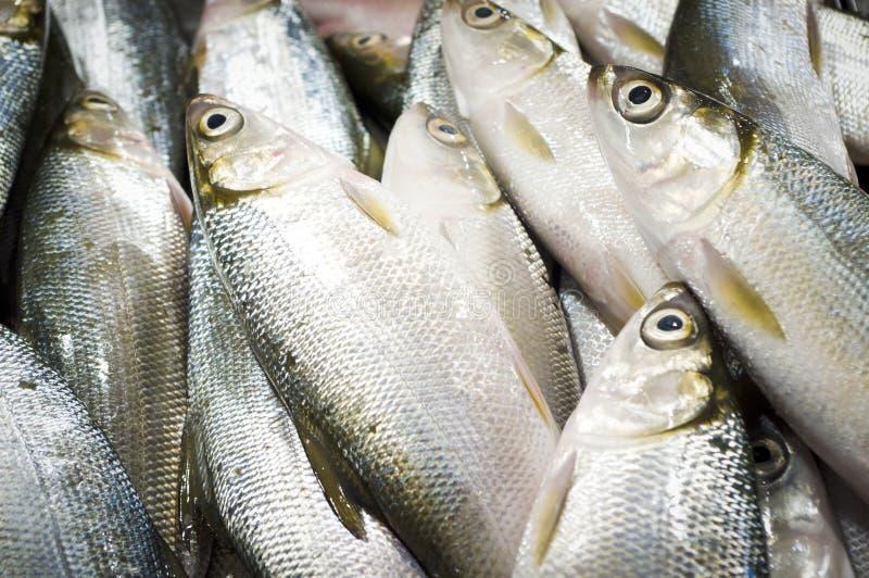 asiatisk fisksäljare arkivfoto