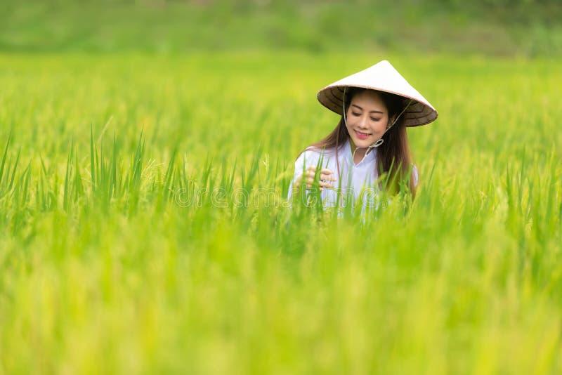 Asiatisk härlig kvinnabonde som skördar gröna risfält på terrasserat i Thailand arkivbilder