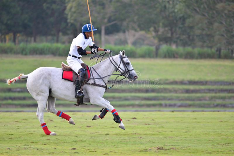 Asiatisk hästpolospelare som befriar i polomatch royaltyfria bilder
