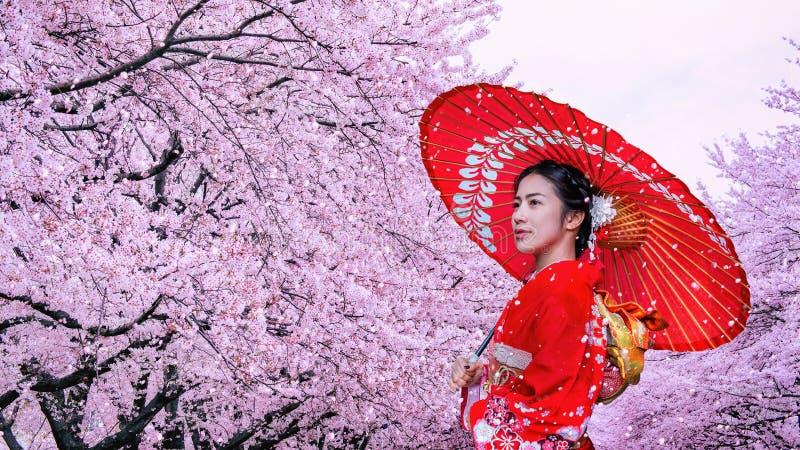 Asiatisk kvinna som b?r den japanska traditionella kimonot och den k?rsb?rsr?da blomningen i v?ren, Japan royaltyfri foto